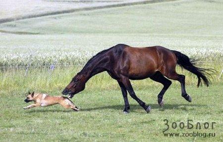Кто кого: лошадь или собака
