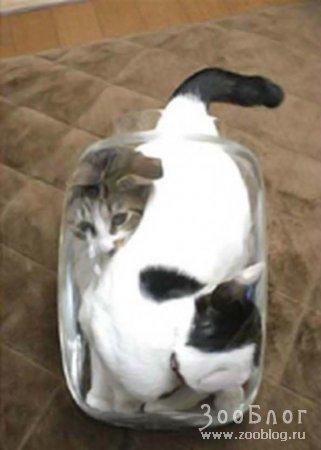 Кошки в банке
