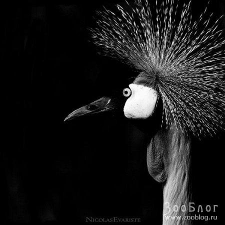 В черно-белом (7 фото)