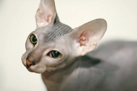 Кот по имени Космос