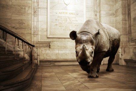 Фотосерия Animalia от Mikel Uribetxeberria