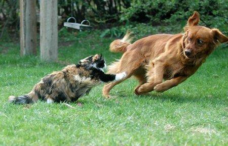 Смешные животные :)