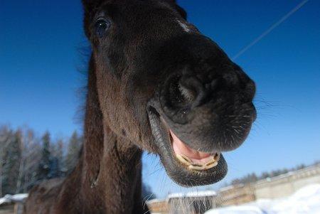 Улыбчивые лошадки