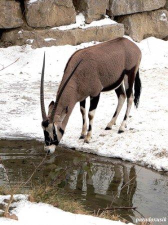 Жители зальцбургского зоопарка