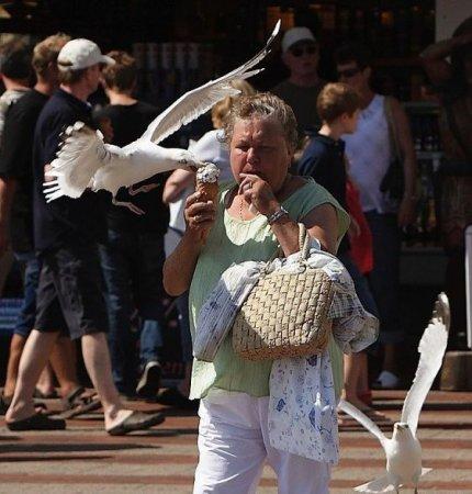 Чайки тоже любят мороженое