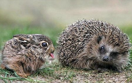 Эти забавные животные (15 фото)