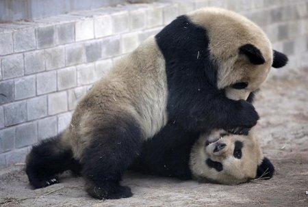 Забавные медвежата