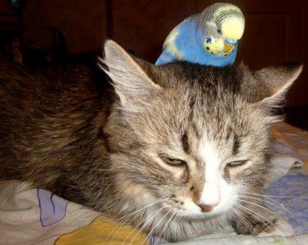 Дружба кошки и попугая