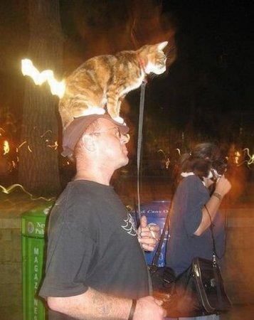 Прогулки с котами