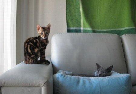 Хитрый котёнок