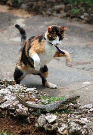Кошка против ящерицы