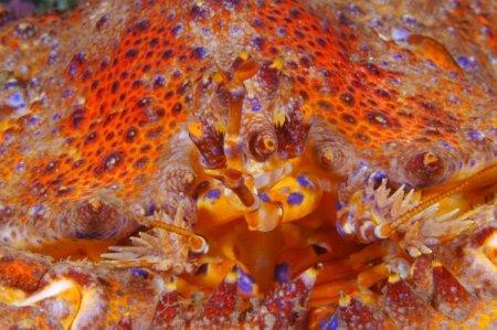 Подводный мир глазами Paul Nicklen