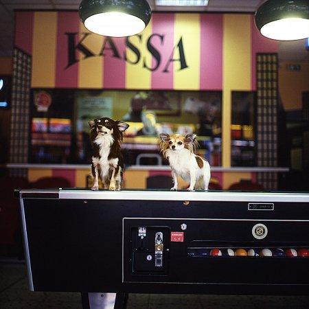 Собаки глазами фотографа Sabine Biedermann