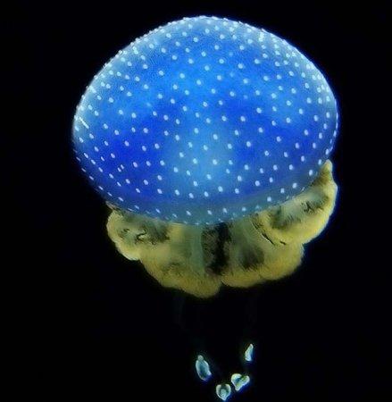 Такие разные медузы