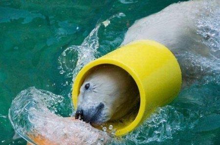 Весёлые полярные медведи
