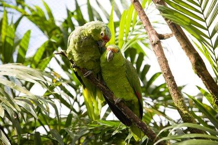 Обитатели Коста-Рики