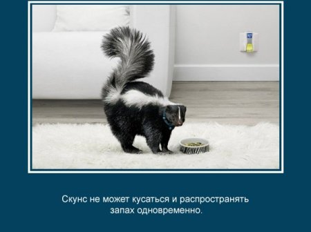 Интересные факты о животных