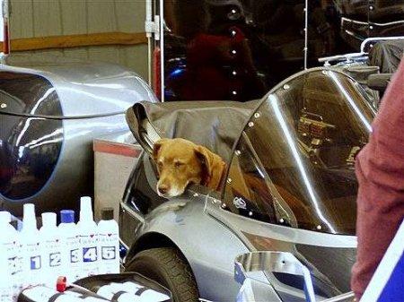 Собаки-байкеры