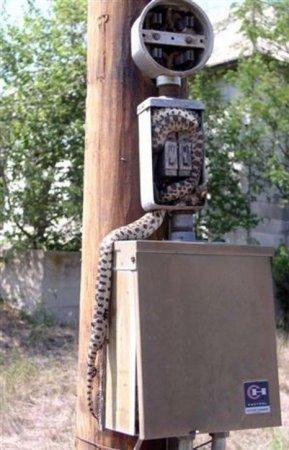 Змея полезла за мышью