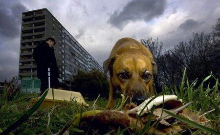 Животные Лондона