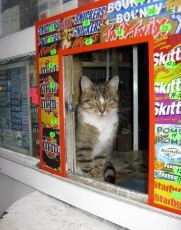 Коты - продавцы