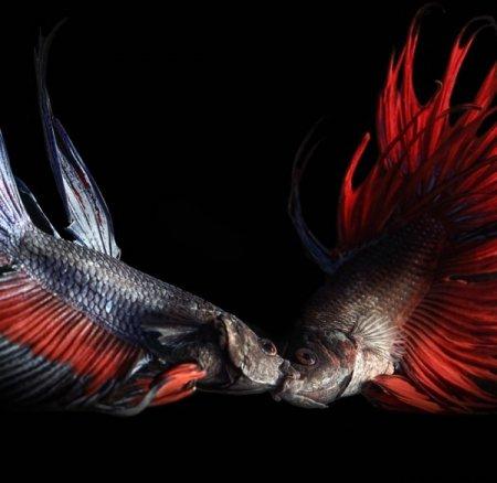 Рыбки от Heru Suryoko