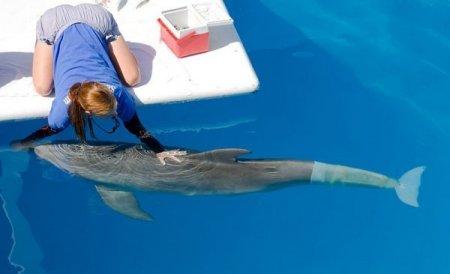 Дельфин с новым хвостом