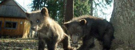 Новорожденные медвежата