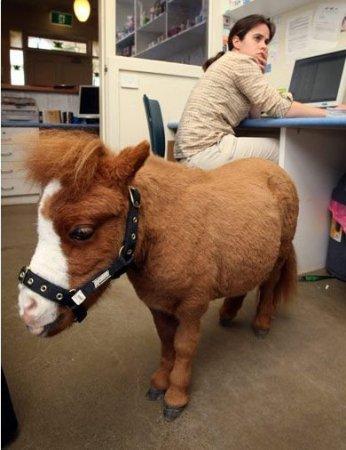 Кода - маленькая лошадка