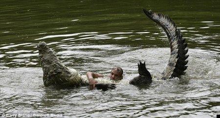 Дружище крокодил