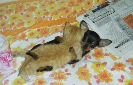 Любовь между собаками и кошками