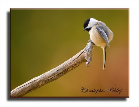 Птицы от Christopher Schlaf