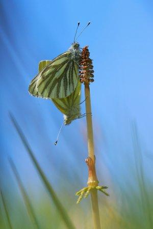 Макро - насекомые