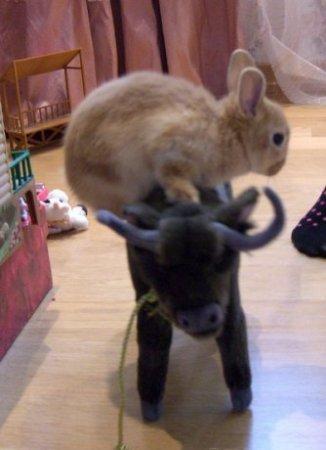Кролик в игрушечном мире