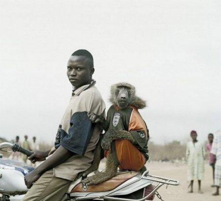 Африканские домашние животные