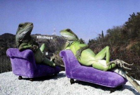 Ящерицы-фотомодели