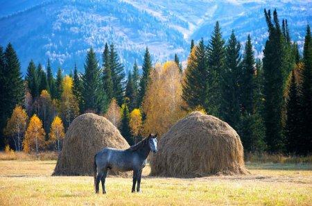 Лошади с казахских степей