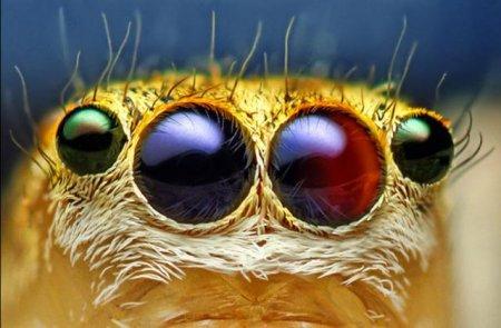 Фасеточные глаза