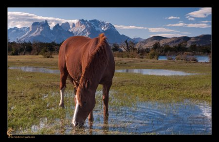 Красивый пейзаж, красивые лошади