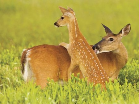 Мамы в дикой природе