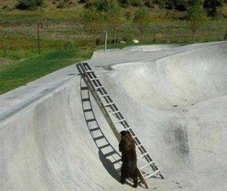 Охрана помогла медведю