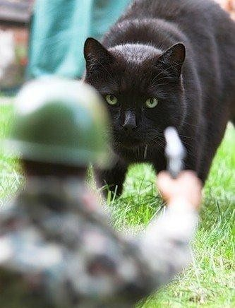 Коты на охоте