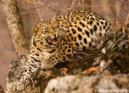 Победители конкурса Wildlife Photographer 2009