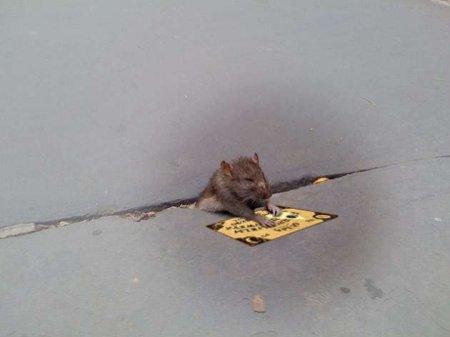Фотожаба на мышонка