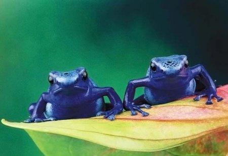 Немного о лягушках