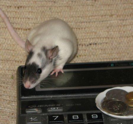 Экономная мышка