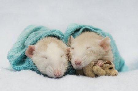 Сонные крыски