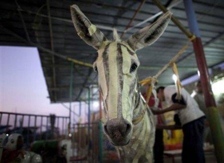 Ненастоящие зебры