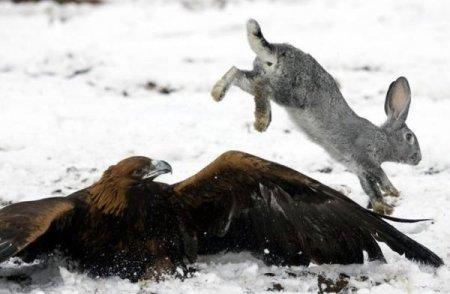 Охота на кроликов