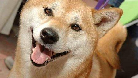 Улыбчивые собаки